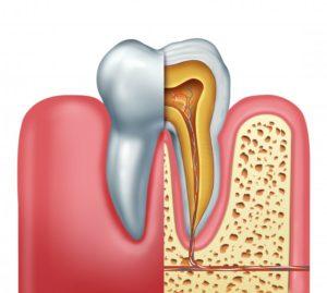 human tooth illustration
